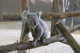 王立メルボルン動物園