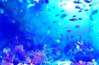 ポーリー・ウッドサイド海洋博物館