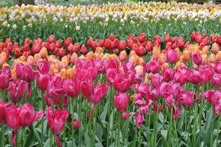 ウェリントン植物園